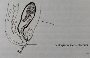 fases parto dequitação placenta
